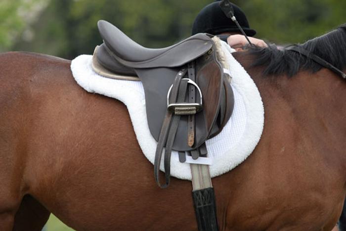horse-tack-570